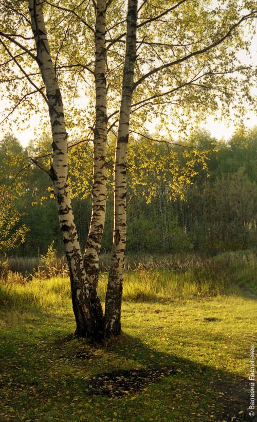 peizazh2.jpg